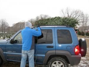 Christmas tree on car roof